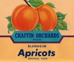 Chaffin Orchards Vintage Blenheim Apricot Label